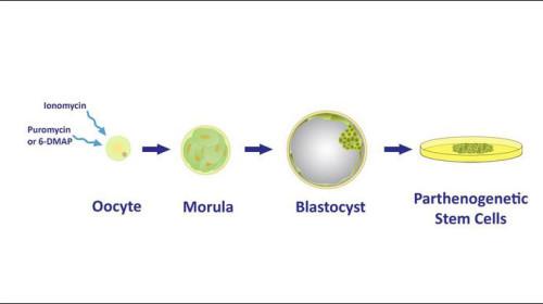 International Stem Cell Corporation to Raise $6.3 Million